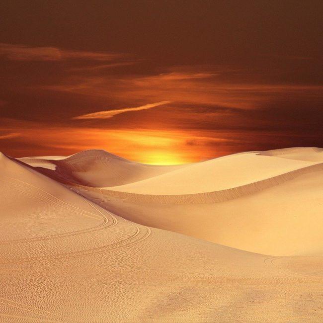 Dune Magic Mushroom